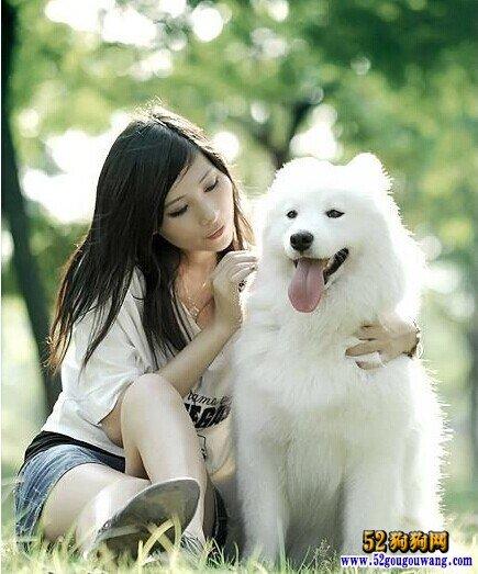 夏季萨摩耶犬