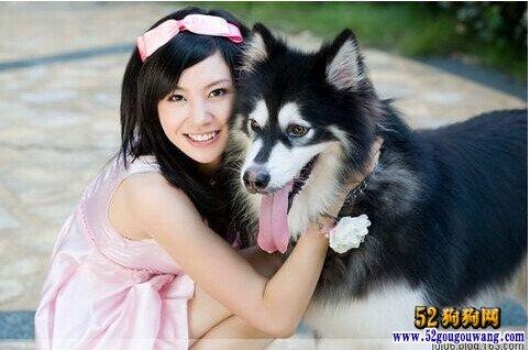 阿拉斯加犬和美女