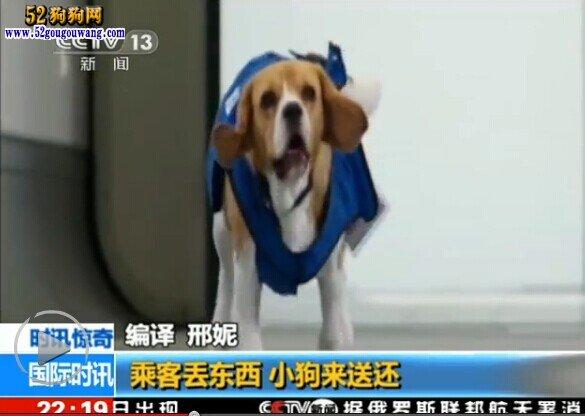 乘客丢东西小狗来送还,狗狗负责乘客失物招领工作