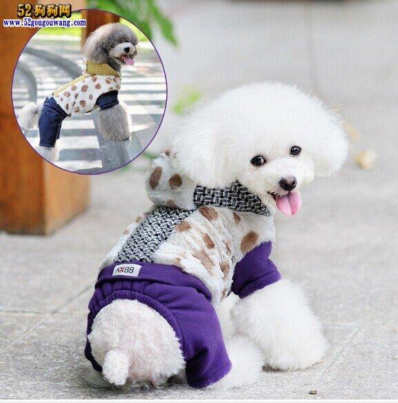 冬季怎么给贵宾犬美容,冬天贵宾犬美容注意事项