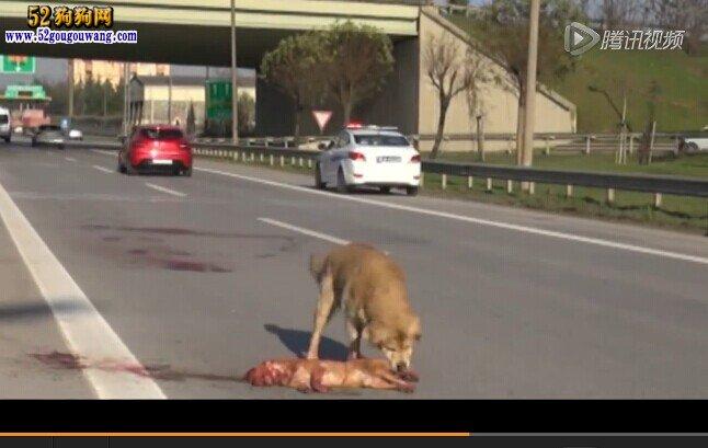 高速上撞到小动物怎么办 需不需要承担一定的责任 今日临沂