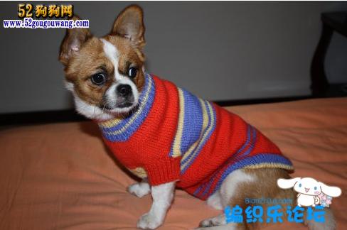 狗狗毛衣编织图_52狗狗网