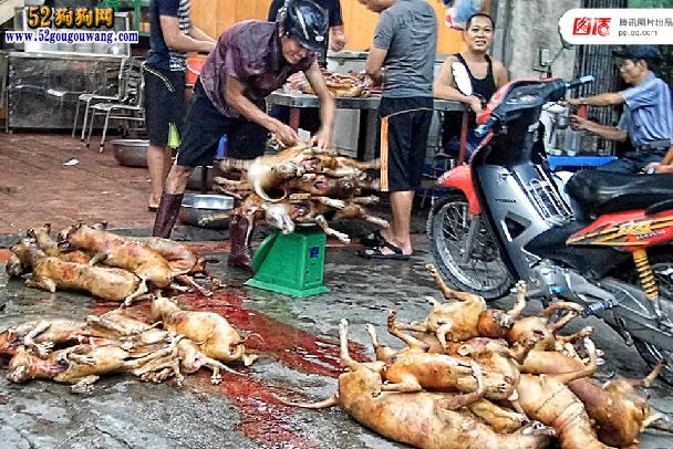 """全球吃狗争议 拿什么拯救这些""""肉狗""""图10"""