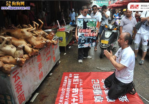 """全球吃狗争议 拿什么拯救这些""""肉狗""""图16"""