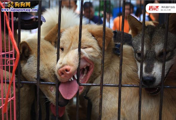 """全球吃狗争议 拿什么拯救这些""""肉狗""""图18"""