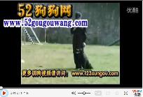 约克夏犬约克夏狗狗训练视频教程