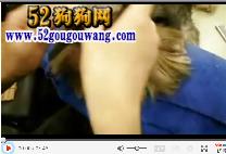 怎么给约克夏犬梳辫子视频