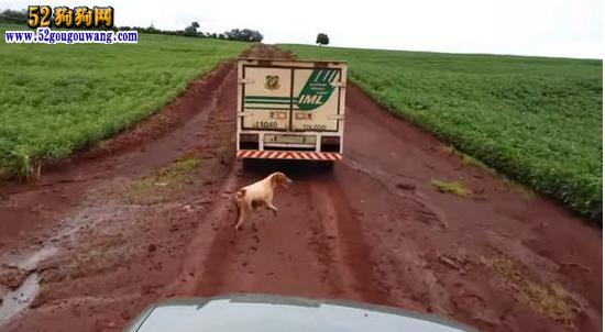 情深意重的狗狗,主人被杀狗追灵车16公里直到无力(组图)