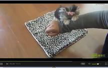 聪明可爱的约克夏犬和主人游戏视频