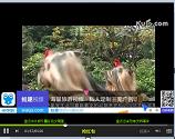 【视频】漂亮的娇美小公主约克夏犬欣赏