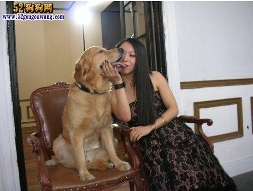 狗狗新闻      原标题:女子上班前和狗狗吻别 嘴唇被咬裂险毁容