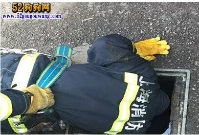 上海消防员跳粪坑救狗 如此敬业值得爱狗人士点赞