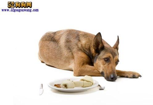 狗狗肠胃不好吃什么