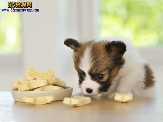 狗狗肠胃不好怎么调理