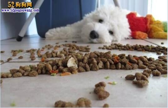 狗狗急性肠胃炎