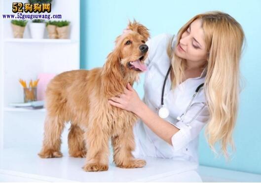 狗狗感冒的症状