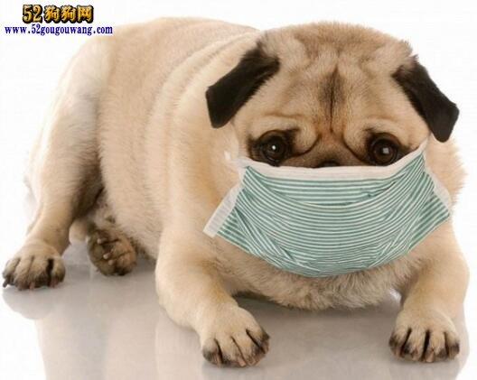 狗狗感冒了怎么办