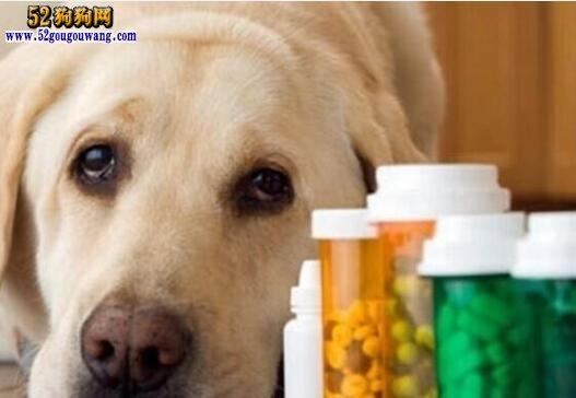 狗狗感冒症状