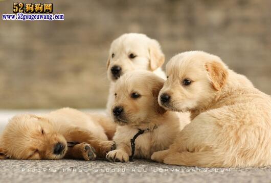 狗会感冒吗 狗感冒怎么办呢?