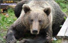 俄罗斯男子森林迷路遭狗熊袭击