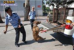 西安32岁女子狂犬病发展身亡 养