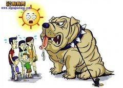 浙江酷暑:温州猫狗热疯了!每天