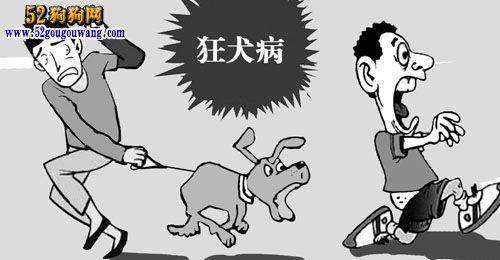 狗狗传染病