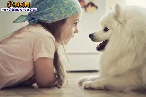 狗狗的传染病