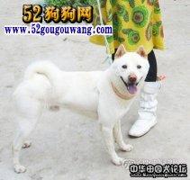 中华田园犬品种分类:十二大品系你了解多少种