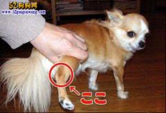 【谷登关节宝】耀世登场 解决狗