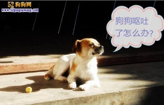 狗狗反胃 狗狗经常反胃怎么办?