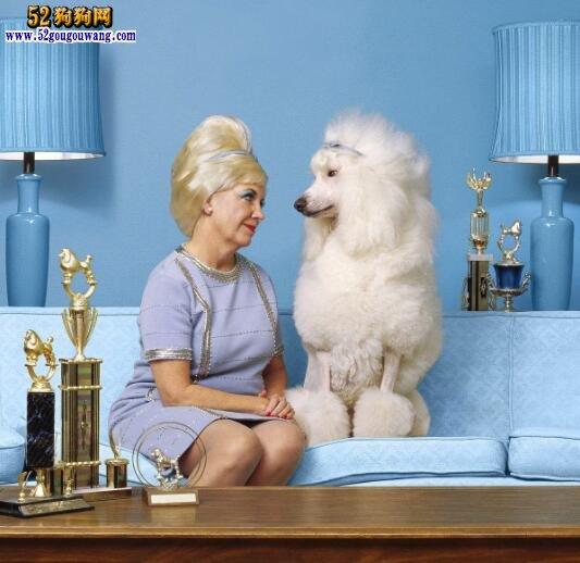贵宾犬毛色特征和优缺点