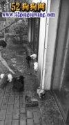 长沙一别墅地下室养20多条狗 如