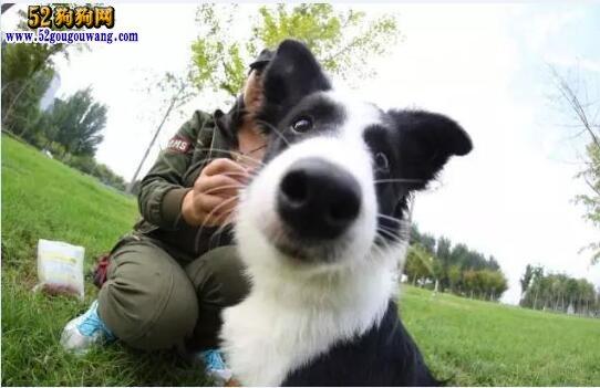 """""""共享经济势不可挡"""":10元共享宠物狗狗开始营业!"""