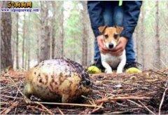 男子遛狗遇上吓人小球 原来是开