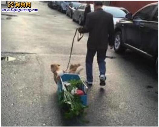 """两小狗拉""""狗车""""出行 这样去菜市场都倍有面子!"""