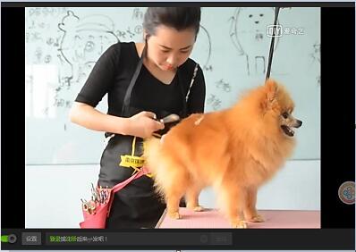 给狗狗美容视频 宠物美容不知道的事