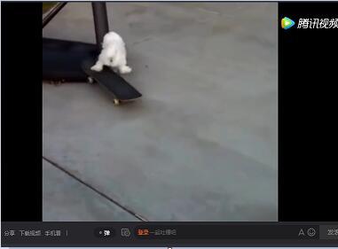 【爆笑狗狗视频】狗狗爆笑视频集锦