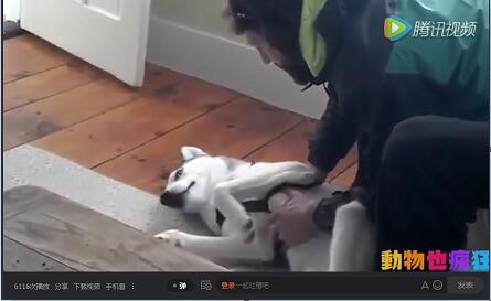 会说话的狗狗视频