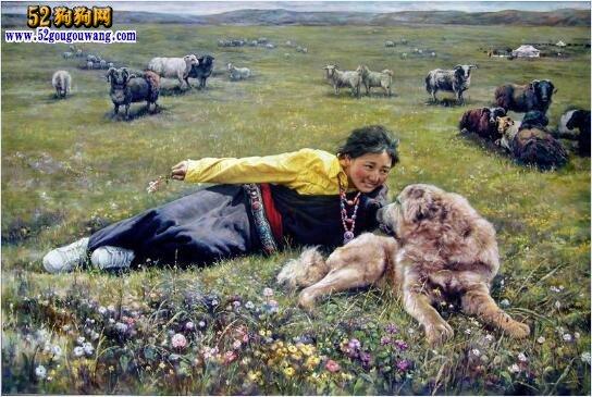 藏獒日记:藏獒日记读后感分享