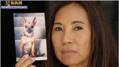 澳洲忠犬八公:勇斗毒蛇救华裔主