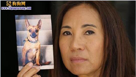 澳洲忠犬八公:勇斗毒蛇救华裔主人中毒死亡!