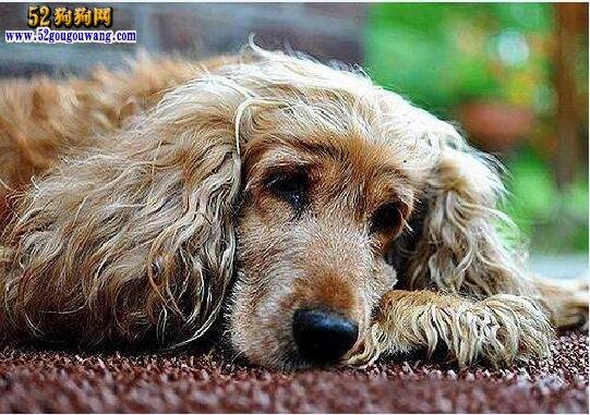 狗狗肠炎吃什么药