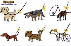 """狗狗系着黄丝带是什么意思?""""黄"""