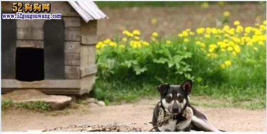 都说农村和城里差距小了!就看狗窝就知道城里和农村的差距在哪儿!