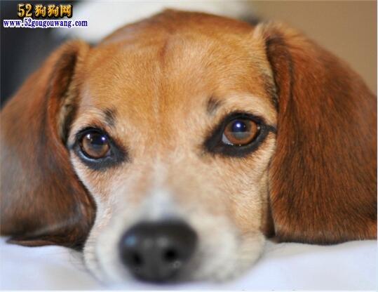 狗狗肠胃炎怎么办