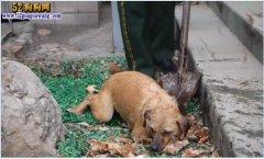 三门峡消防冰湖救宠物狗 和那些