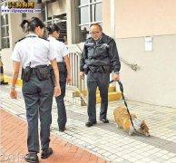狗年话狗:香港宠物犬饲养面面观