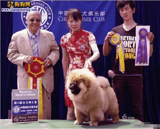 松狮幼犬多少钱?怎么挑选健康的松狮小狗?