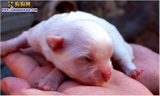 刚出生的狗狗怎么养